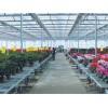 玻璃温室大棚生产/华创农业